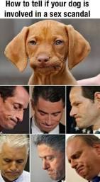 dog-scandals-jpg