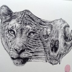 animal-skull-drawings-paul-jackson-10