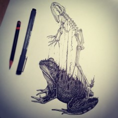 animal-skull-drawings-paul-jackson-3