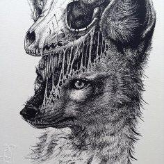 animal-skull-drawings-paul-jackson-6