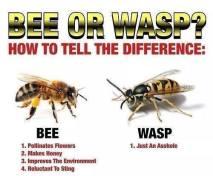 bee-wasp-jpg