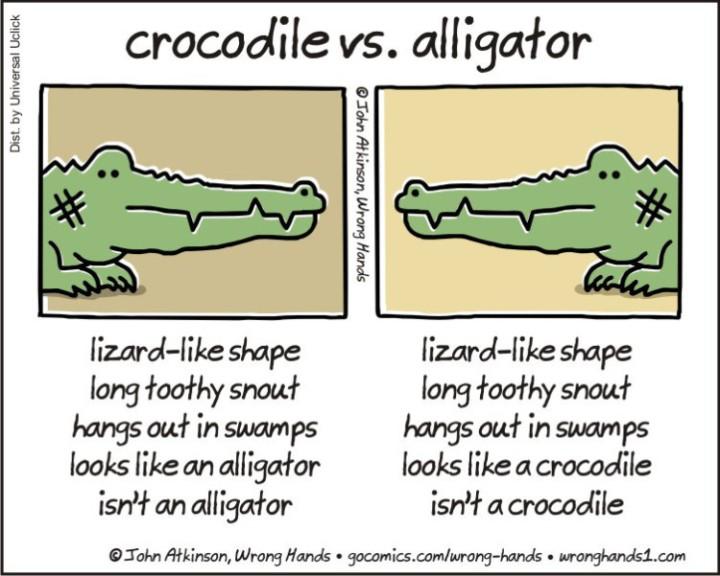 crocodile-vs-alligator